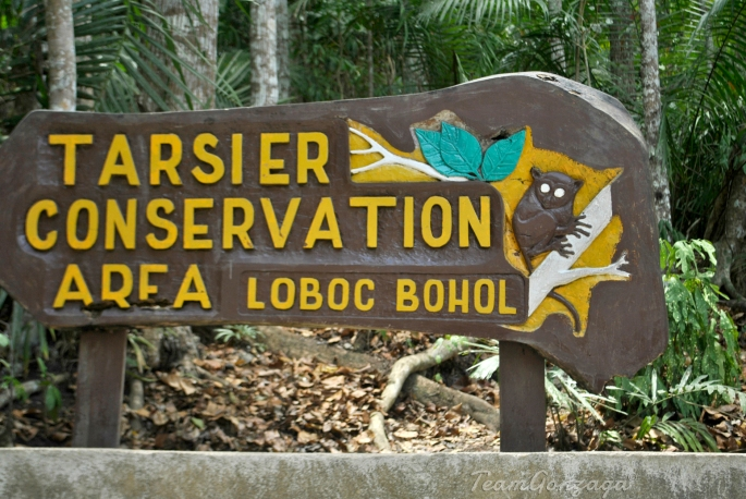 Tarsier conservation area Entrance Fee P60 Kids 10 years below are free